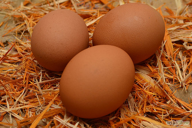 the effect of chicken eggshell on I have lot of search about what the main side effects of eating the meat , chicken and eggs.